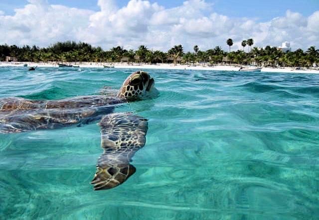 Image by Blue Photo. Akumal, Quintana Roo.