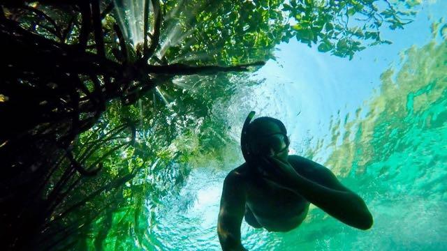 Sian Kaan biodiversity sunset mangrove cenote